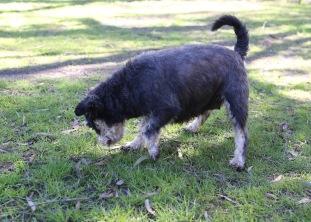 LILA - Bankisa park puppies - 1 of 31 (7)