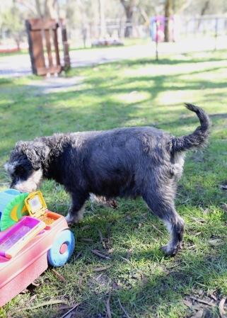 LILA - Bankisa park puppies - 1 of 31 (8)