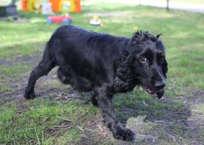 SWISH - Bankisa park puppies - 1 of 22 (11)
