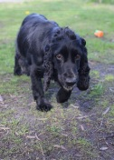 SWISH - Bankisa park puppies - 1 of 22 (21)