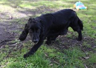 SWISH - Bankisa park puppies - 1 of 22 (4)