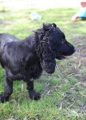 SWISH - Bankisa park puppies - 1 of 22